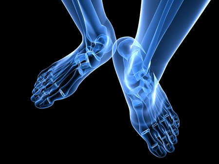 bones of the foot: x-ray foot illustration  Stock Photo