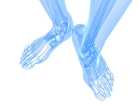x-ray foot illustration  illustration