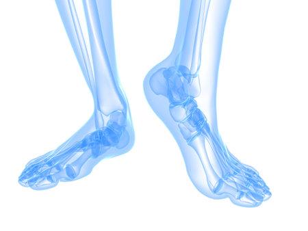 foot bones: x-ray foot illustration  Stock Photo