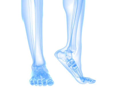 skeletal: x-ray foot illustration  Stock Photo