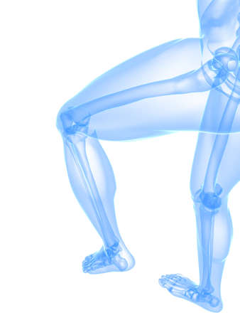 transparent legs with healthy joints Stock Photo - 7248740