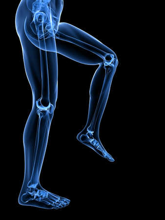 transparent legs with healthy joints Stock Photo - 7248746