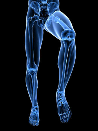 transparent legs with healthy joints Stock Photo - 7248747