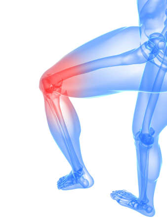 highlighted: skeletal leg with highlighted knee joint