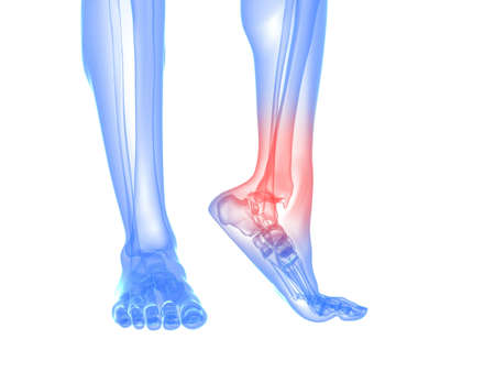 foot pain:  skeletal foot with highlighted ankle