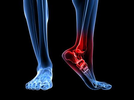 huesos: pie esquel�tico con tobillo resaltado  Foto de archivo