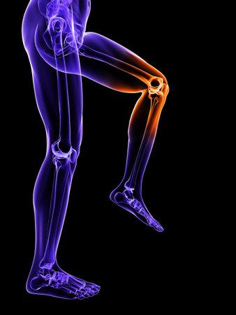 de rodillas: pierna esquel�tica con la articulaci�n de la rodilla resaltada  Foto de archivo