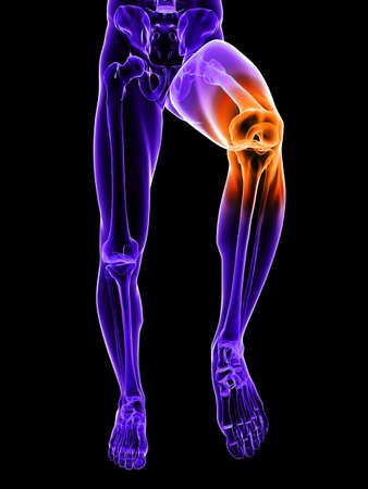 knees: skeletal leg with highlighted knee joint