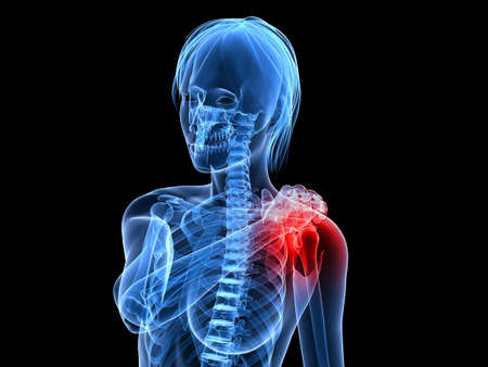 female skeleton with highlighted shoulder Stock Photo - 7165127