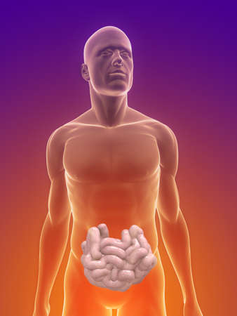 male body with small intestines photo
