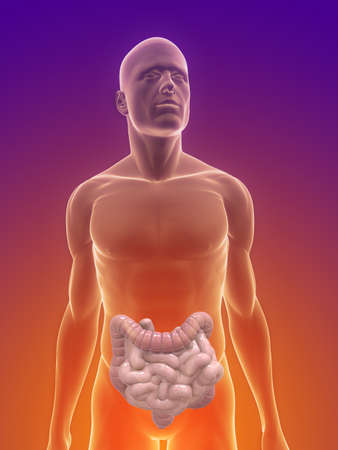 small intestine: male body with colon and small intestines Stock Photo