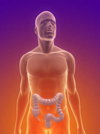 male body with colon Stock Photo - 7159672