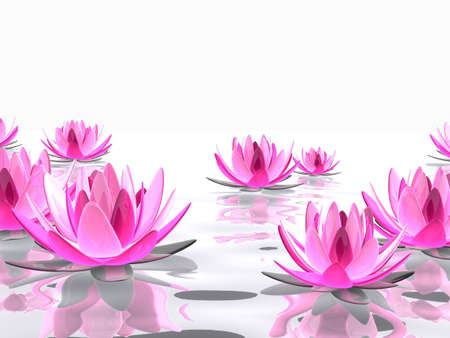 waterlilly: lotus flowers on water