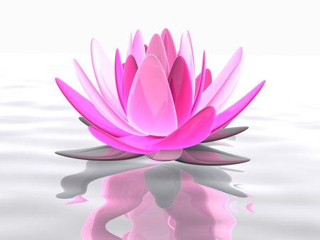 flor de loto: flor de loto sobre el agua