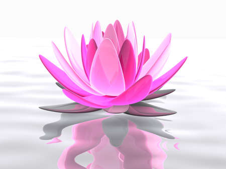 lotus flower on water photo