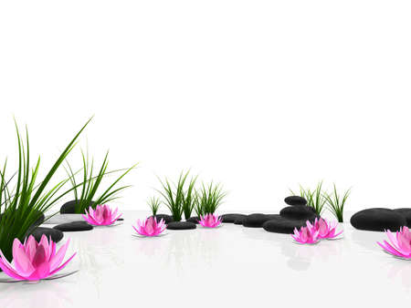 lotus: lotus garden