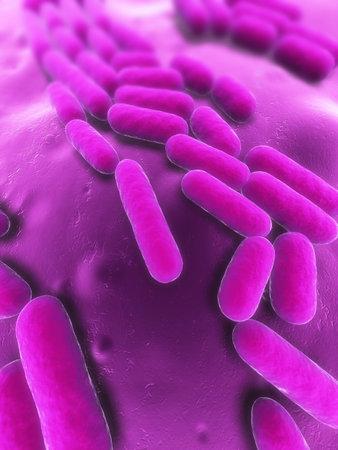 bacteria illustration illustration