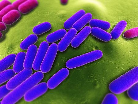 bacterias: Ilustraci�n de las bacterias