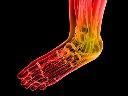 bone anatomy: human foot with highlighted ankle