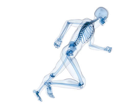 skeleton skull: jogger - running human skeleton