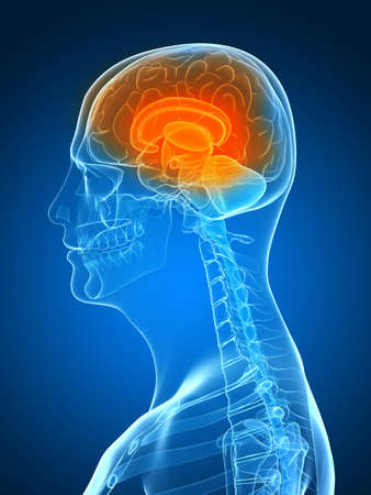 transparent head with highlighted brain