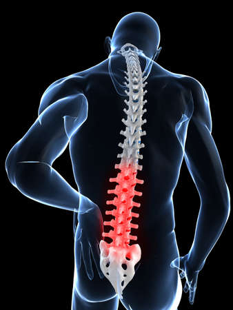 backbone: transparent male body with highlighted spine Stock Photo