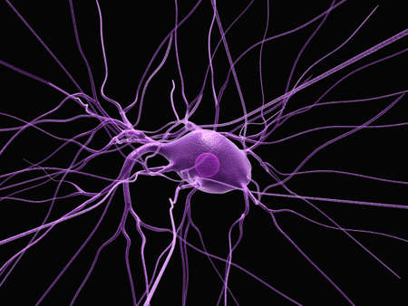 nerve cell - close up photo
