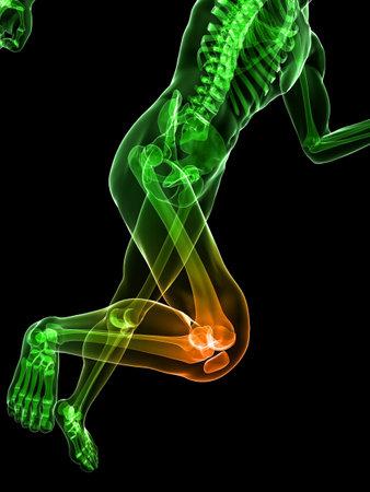 columna vertebral: ejecutando el esqueleto con rodilla resaltada