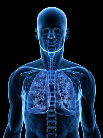 polmone: anatomia trasparente con dettagliate polmone  Archivio Fotografico