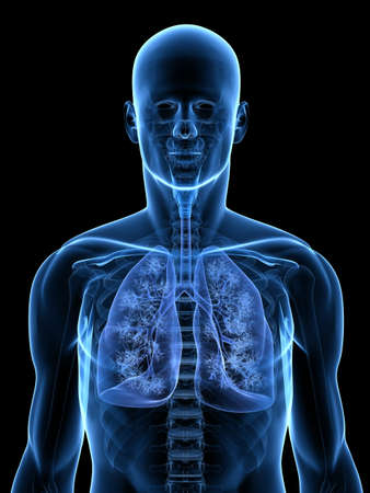 skeletal: transparent anatomy with detailed lung Stock Photo