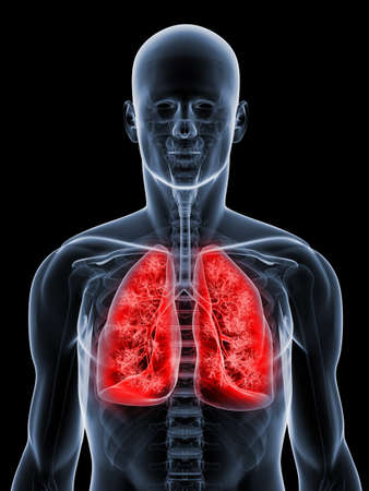 human lungs: transparent anatomy with detailed lung Stock Photo