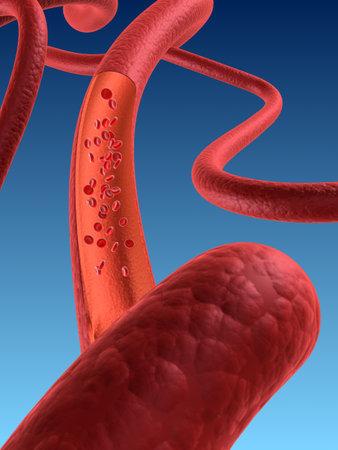 metabolism: artery
