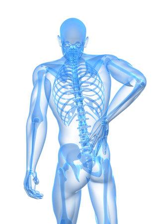 backbone: backache illustration  Stock Photo