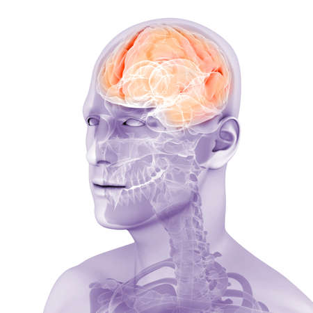 3d rendered medical illustration of a human brain illustration