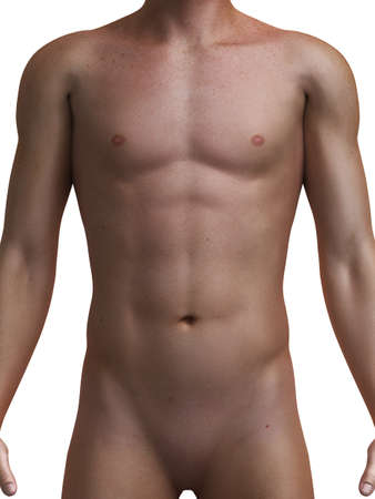 abdomens: 3d rendered medical illustration of a healthy male torso