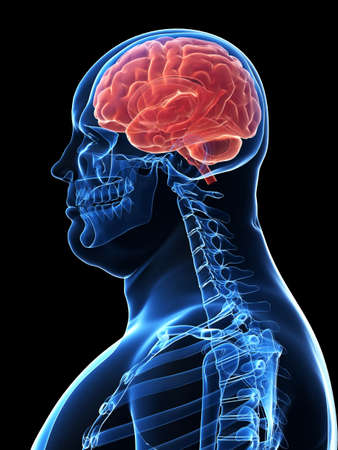 oversized: overweight male skeleton- highlighted brain