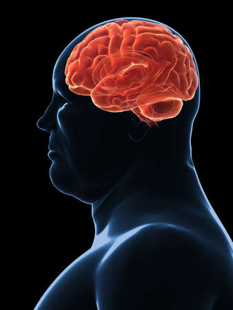 hormone  male: overweight male - brain  Stock Photo