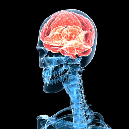 medical scans: human skeleton with highlighted brain Stock Photo