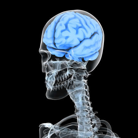 human skeleton with brain Stock fotó