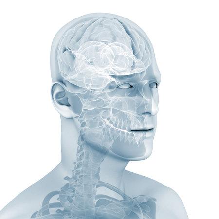 scan: male brain
