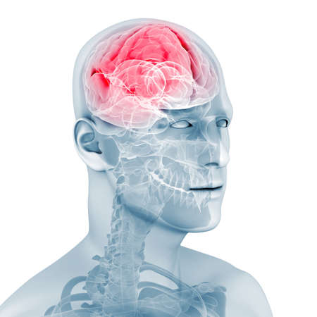male highlighted brain  Stock Photo