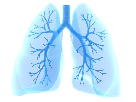 bronchi: bronquios