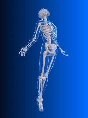 huesos humanos: aumento del cuerpo - rayos x