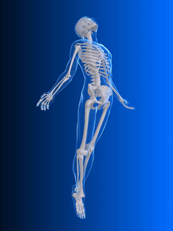 skeleton x ray: rising body - x-ray