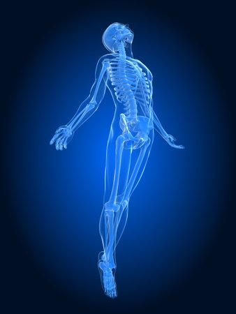 esqueleto humano: el aumento del cuerpo - de rayos X Foto de archivo