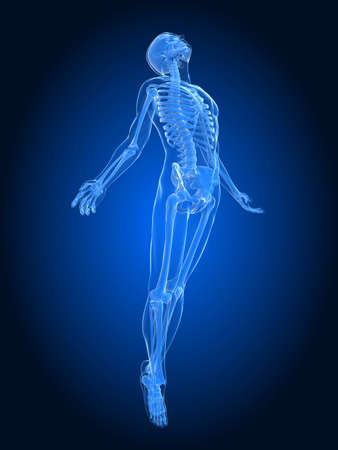 skeletal: rising body - x-ray