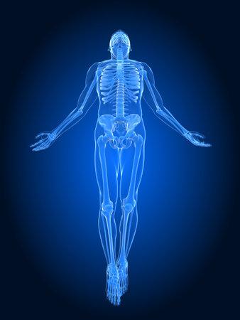 3d bone: rising body - x-ray