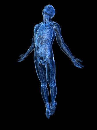 aumento del cuerpo - de rayos x