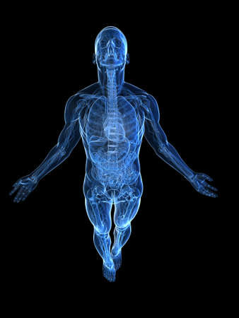 transparent male anatomy: rising body - x-ray