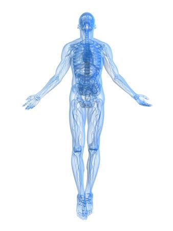 x ray skeleton: rising body - x-ray
